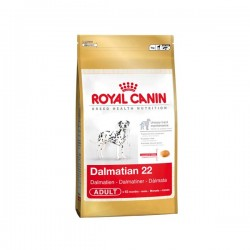 Dalmatian 12 kg