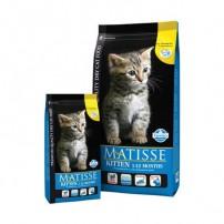 Matisse Kitten