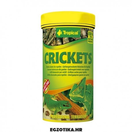 Tropical Crickets
