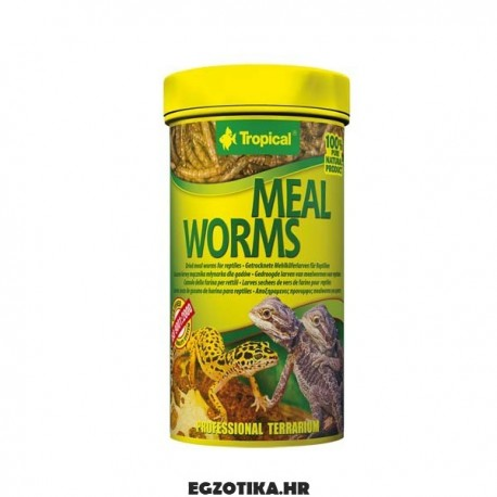 Tropical Mealworms